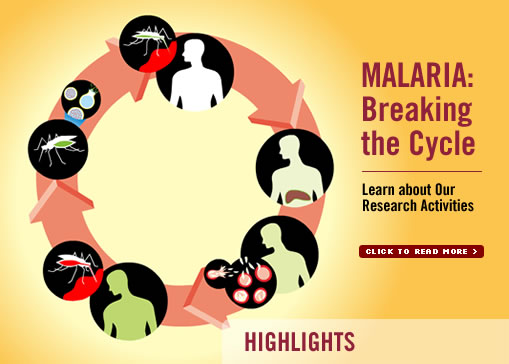 Malaria Lifecycle